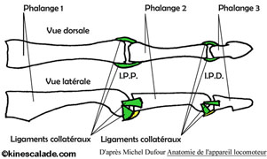 Sracf 1159 7151 2007 act 27 1 1251 together with Index in addition C ent dgt in addition Le Developpement De La Force Maximum Des Doigts moreover  on prehensions